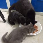 Chatte et ses 3 chatons