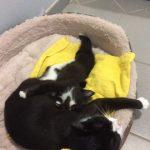 Chatte et chaton retrouvés 2 jours après